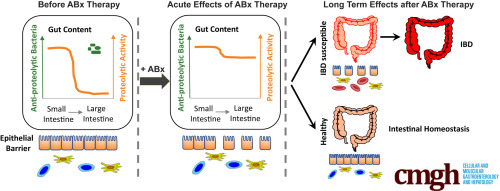 Increased Pancreatic Protease Activity in Response to